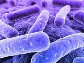 βακτηριακή κολπίτιδα